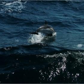 Казват,че делфините били като нас...