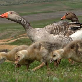 Семейна разходка