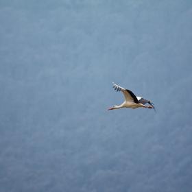 caught in flight