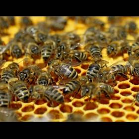 Имам си пчелички