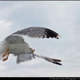 Да погледнем под крило