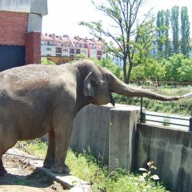 Слонът, мой приятел!