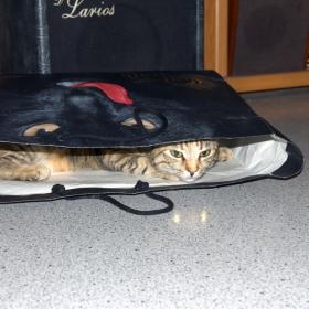 Котката която обича да се крие в торби и очите и светят като прожектори. (Обърнете внимание на пода)