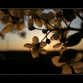 Пролетен залез