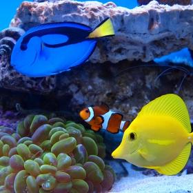Тропически риби