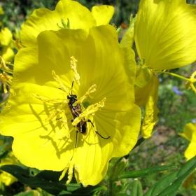 Буболечка в цвете