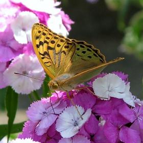 Един слънчев ден,една пеперудка и малко цветя !