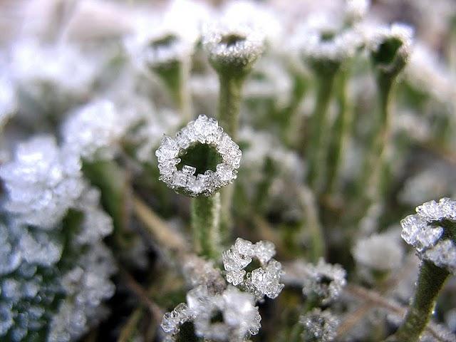 В сърцето на  Нейно Величество Зимата