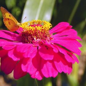 Пеперудена душа