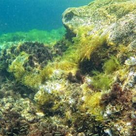 Под вода 2