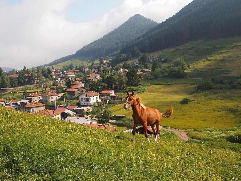 Волни като конете, фотопленер Равногор, 25.06.2011