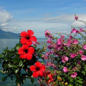 Цветя и море