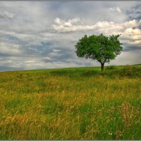 ... Дървото.........