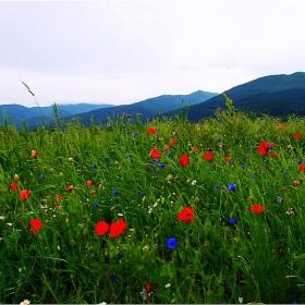 Юнски пейзаж