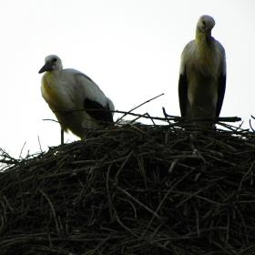 южни гости