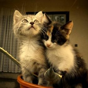 Ромео и Жулиета:)))