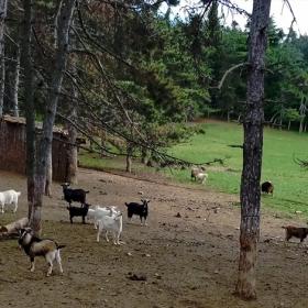 Козият рай