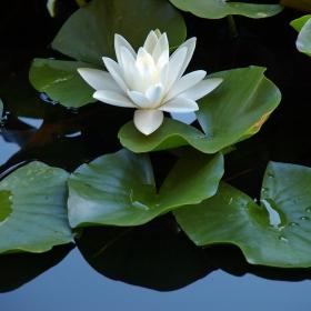 Красота изникнала от водата ...