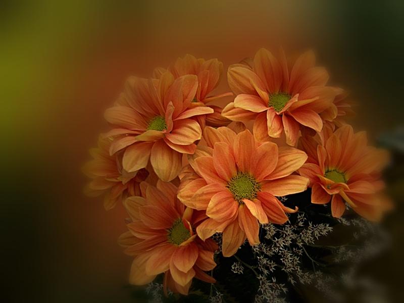 Цветен облак от надежда