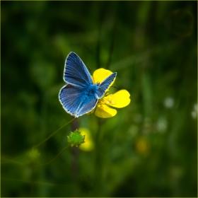 Синята принцеса