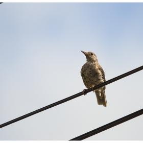 Ти чуваш ли как пеят птиците?