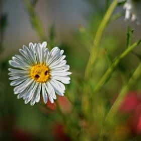 цветно... от градината