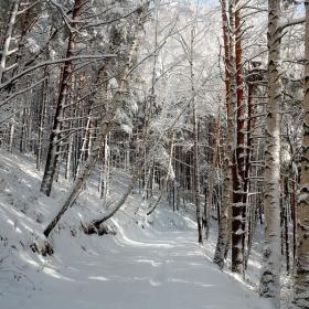 Березовьй лес