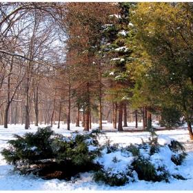Зимни разходки 7