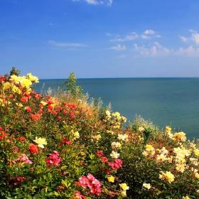 Родно Черноморие