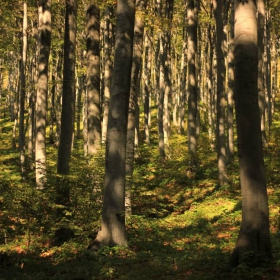 лесът...