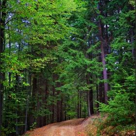 сред гората...