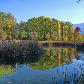 Есен и отражения в парка