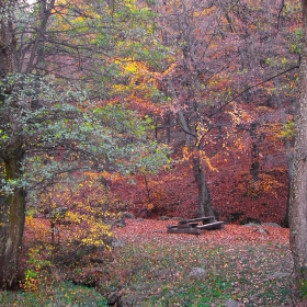 Есента... Витошки красоти...