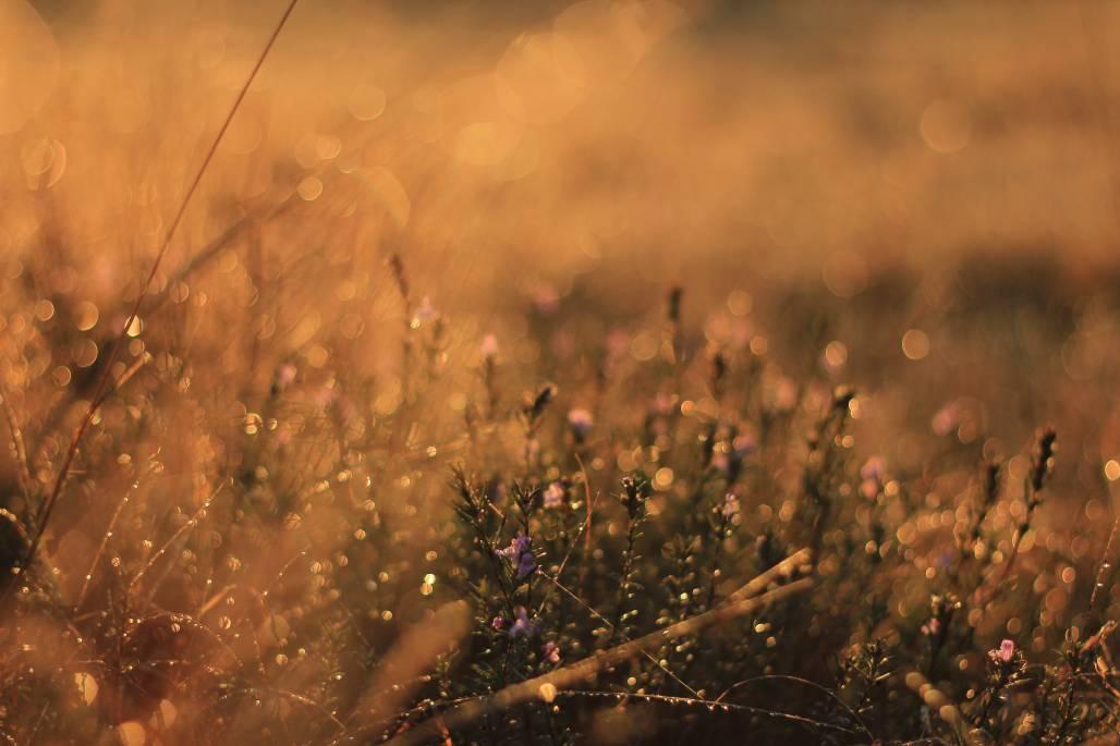 ноемврийска роса