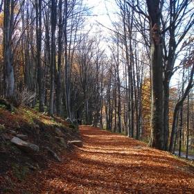 Есен по пътеката