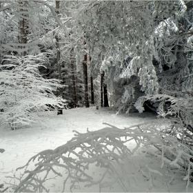 Зимна приказка-2