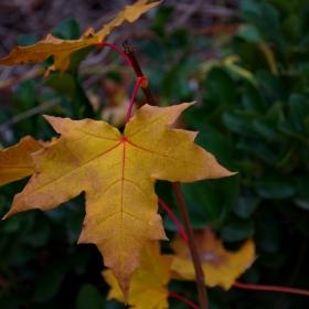 Спомени от есента ... последни есенни листа