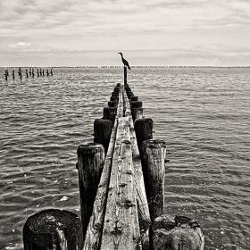 Самотни посоки