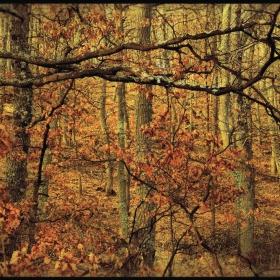 Топлите есенни цветове