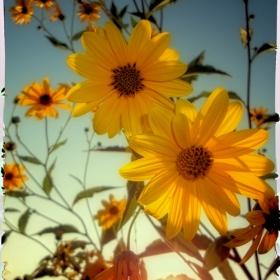 Слънчице в душата