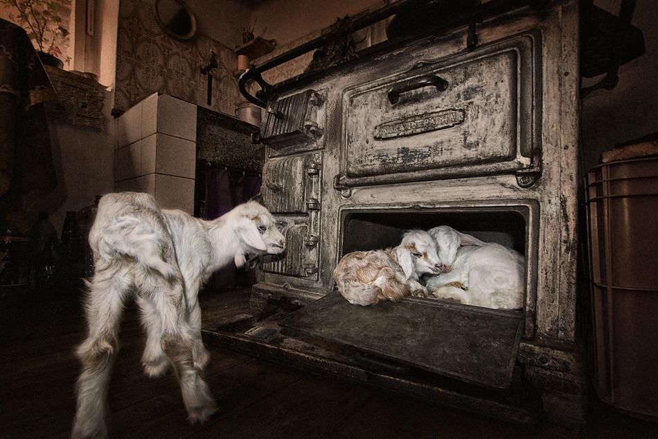 Хайде не разваляйте приказката, в печката да остане само един!