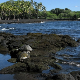 Panaluu Black Sand Beach (Big Island- Hawaii) или Заливът на костенурките