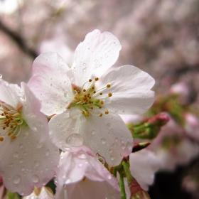 Пролет през прозореца