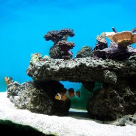 Морски аквариум