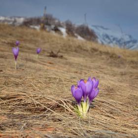 Пролет в резерват