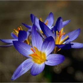цветовете на пролетта 3