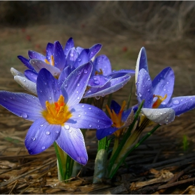 цветовете на пролетта 4