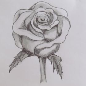 На едно нежно цвете, родено днес