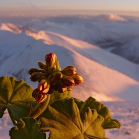 Поздрав за всички влюбени в планината