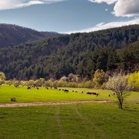Пролет в Родопите